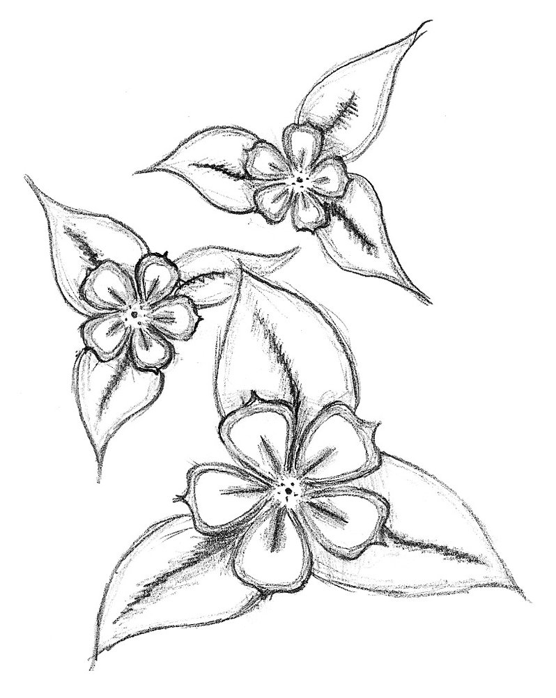 Pencil Simple Art Flower Drawing Creative Ideas
