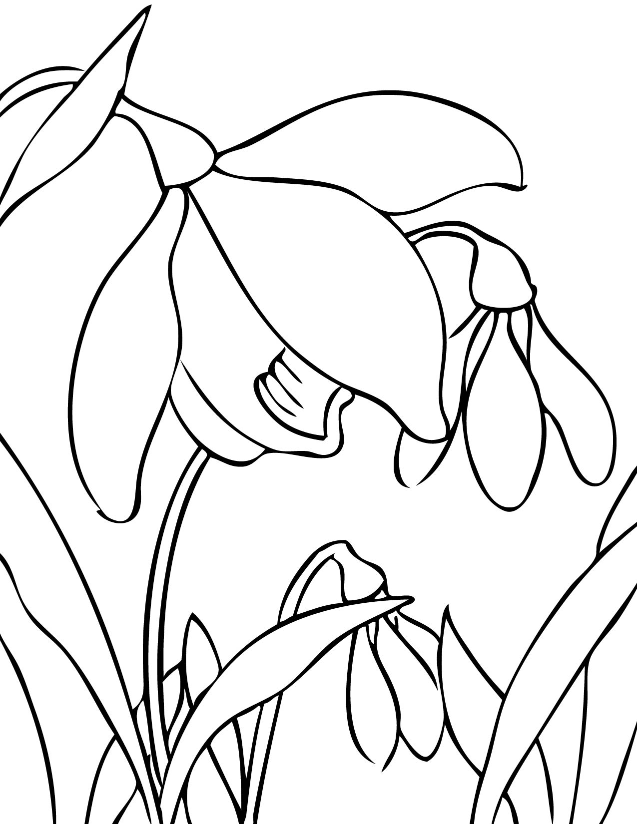 Free Drawings Of Spring Flowers Download Free Clip Art