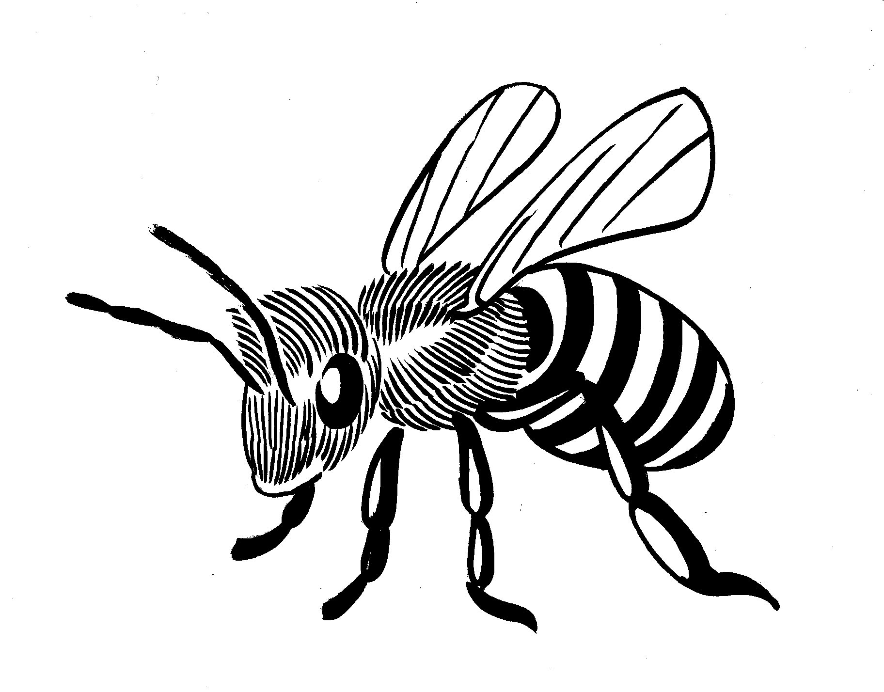 Free Bee Line Art Download Free Clip Art Free Clip Art