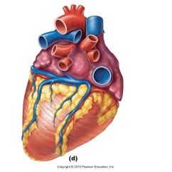 Unlabeled Heart Diagram Cross Section Intertherm Thermostat Wiring Free Unlabelled Of The Download Clip