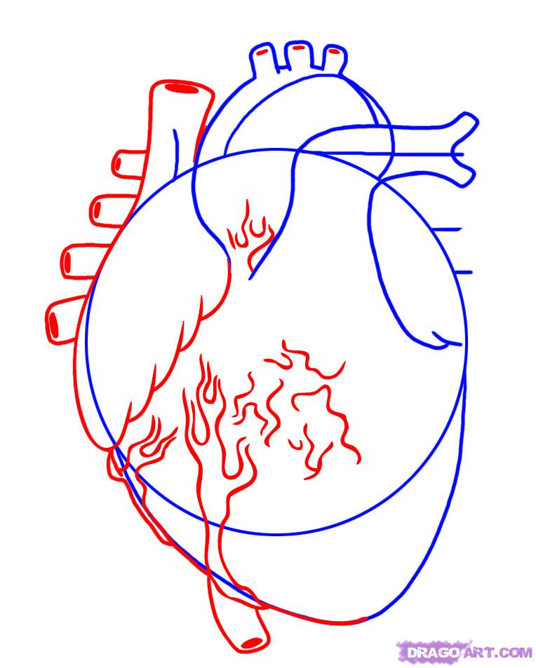 sketch diagram online water level controller wiring free human heart download clip art page 2 for query picturespider com