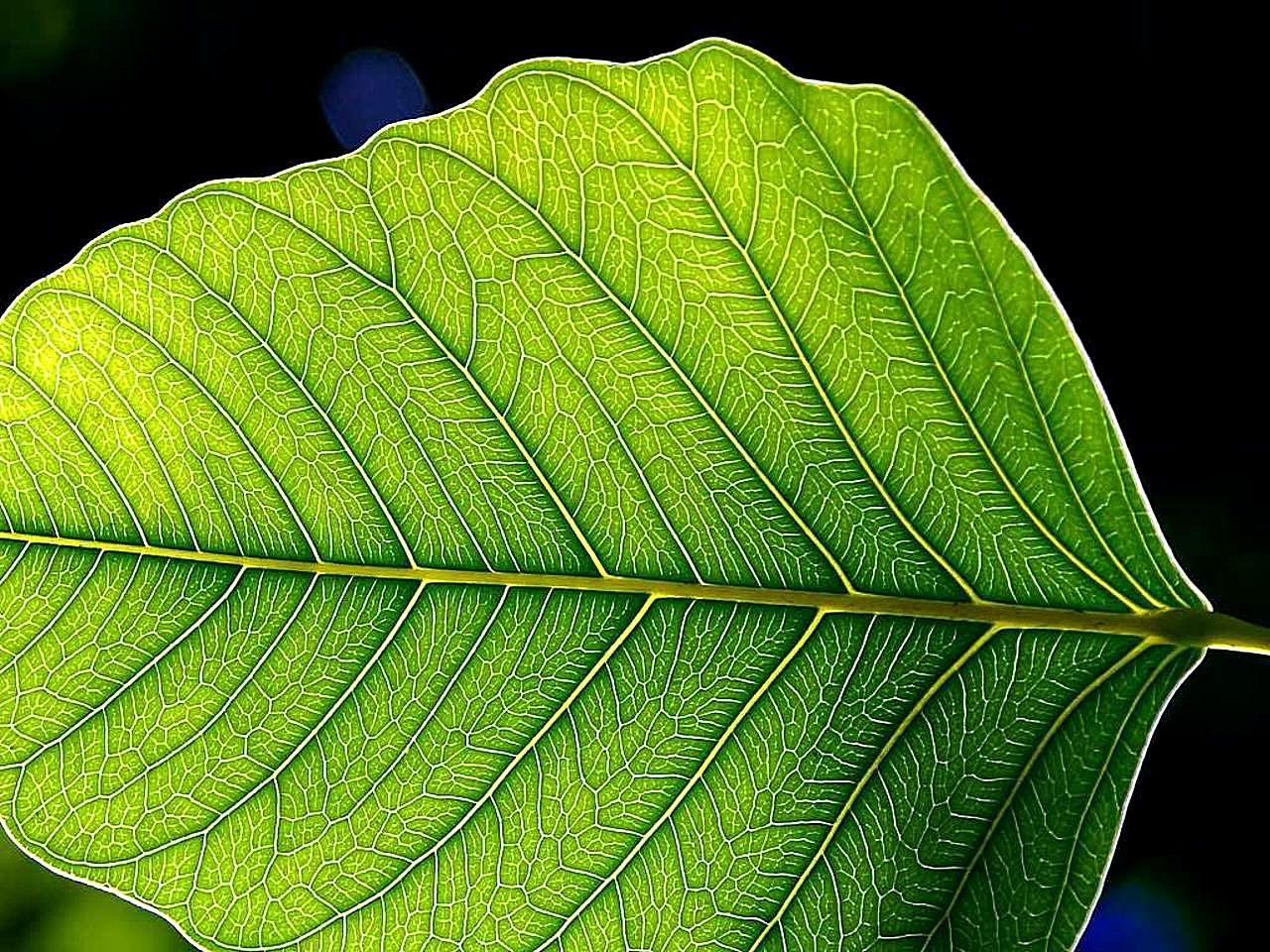Flashlight 3d Wallpaper Free Leaves Download Free Clip Art Free Clip Art On