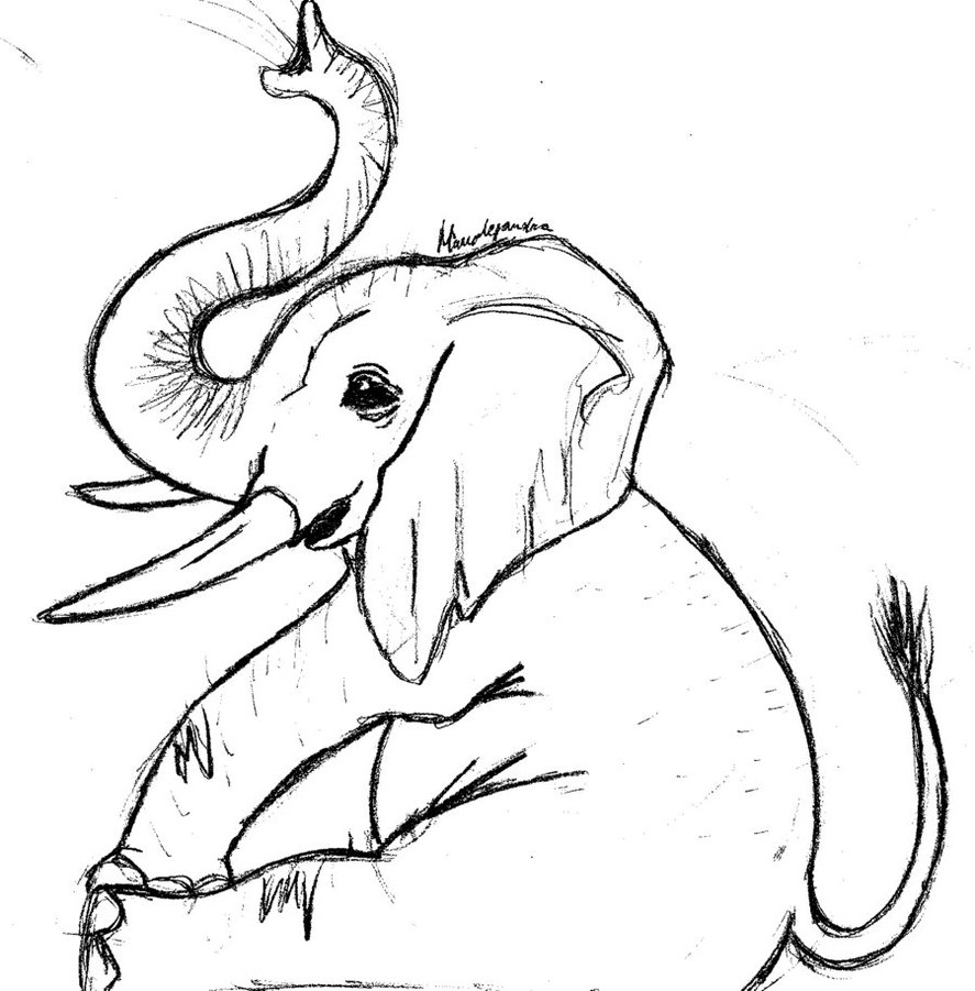 Free Line Drawing Of Elephant Download Free Clip Art Free Clip Art on Clipart Library