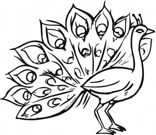 Free Peacock Drawing, Download Free Clip Art, Free Clip