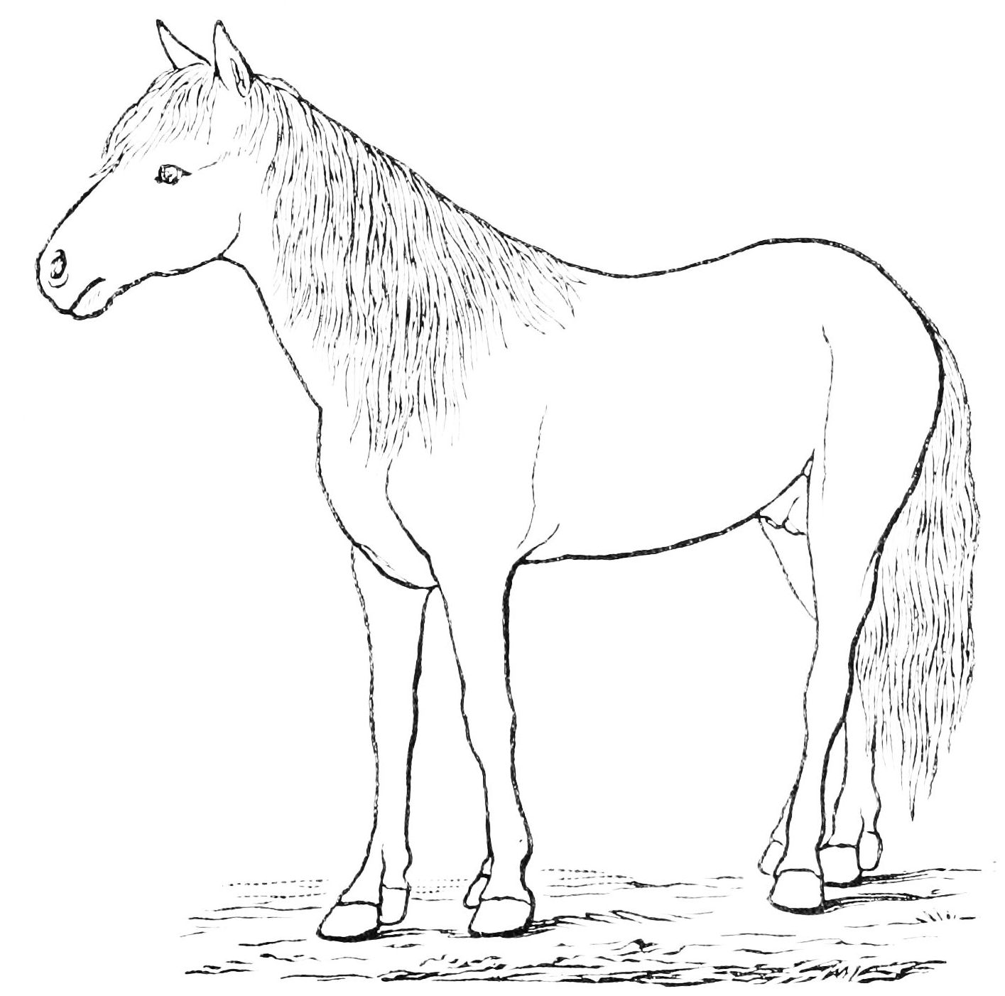 Free Printable Horse Outline Download Free Clip Art Free