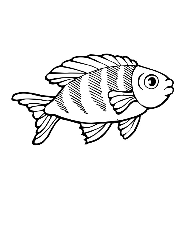 koi fish coloring pages # 14