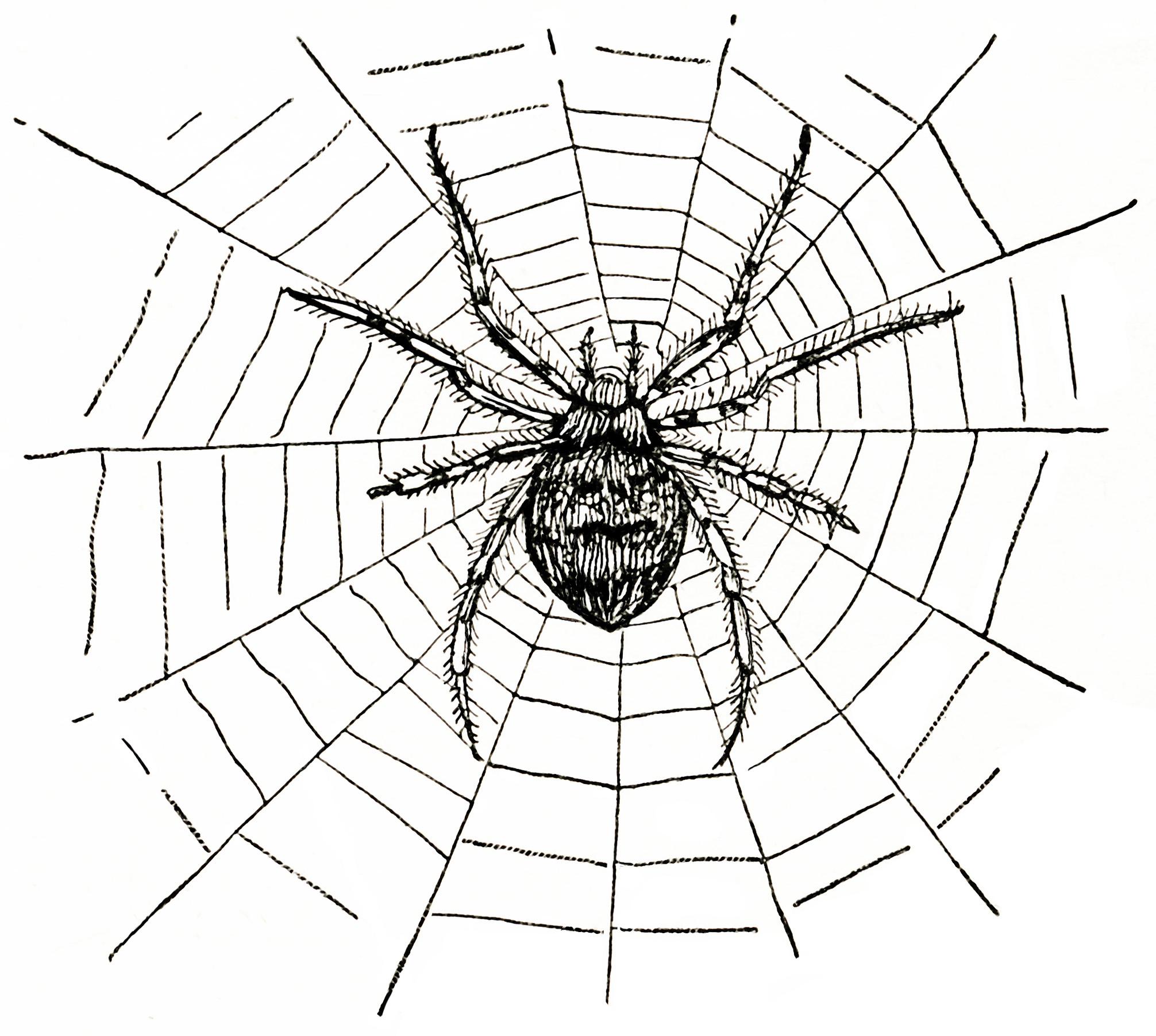 Spider And Spiderweb Free Vintage Clip Art
