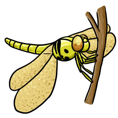 free dragonfly