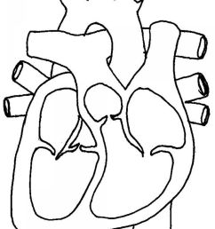 human heart diagram cross section human anatomy diagram [ 1280 x 1685 Pixel ]