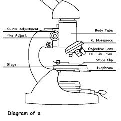 Microscope Diagram Enchanted Learning 1000 Watt Hps Ballast Wiring Free Drawing Download Clip Art On Of A Diabetes Inc