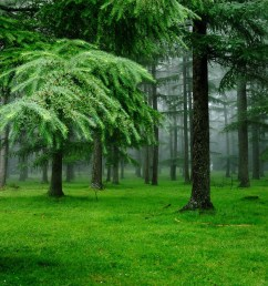 green forest trees clipart free clipart [ 2048 x 1370 Pixel ]