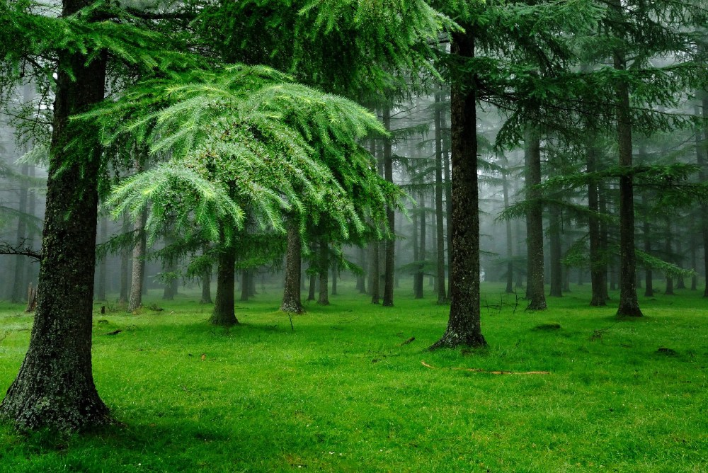 medium resolution of green forest trees clipart free clipart