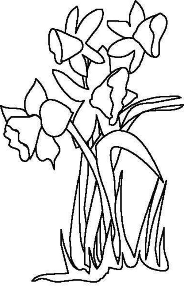 Free Daffodil Outline, Download Free Clip Art, Free Clip