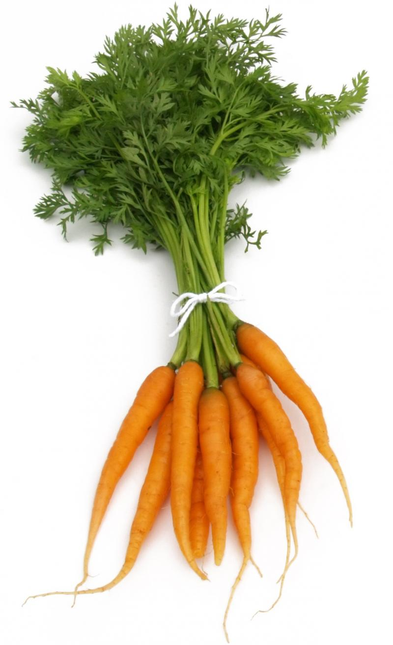 Free Carrots Picture Download Free Clip Art Free Clip
