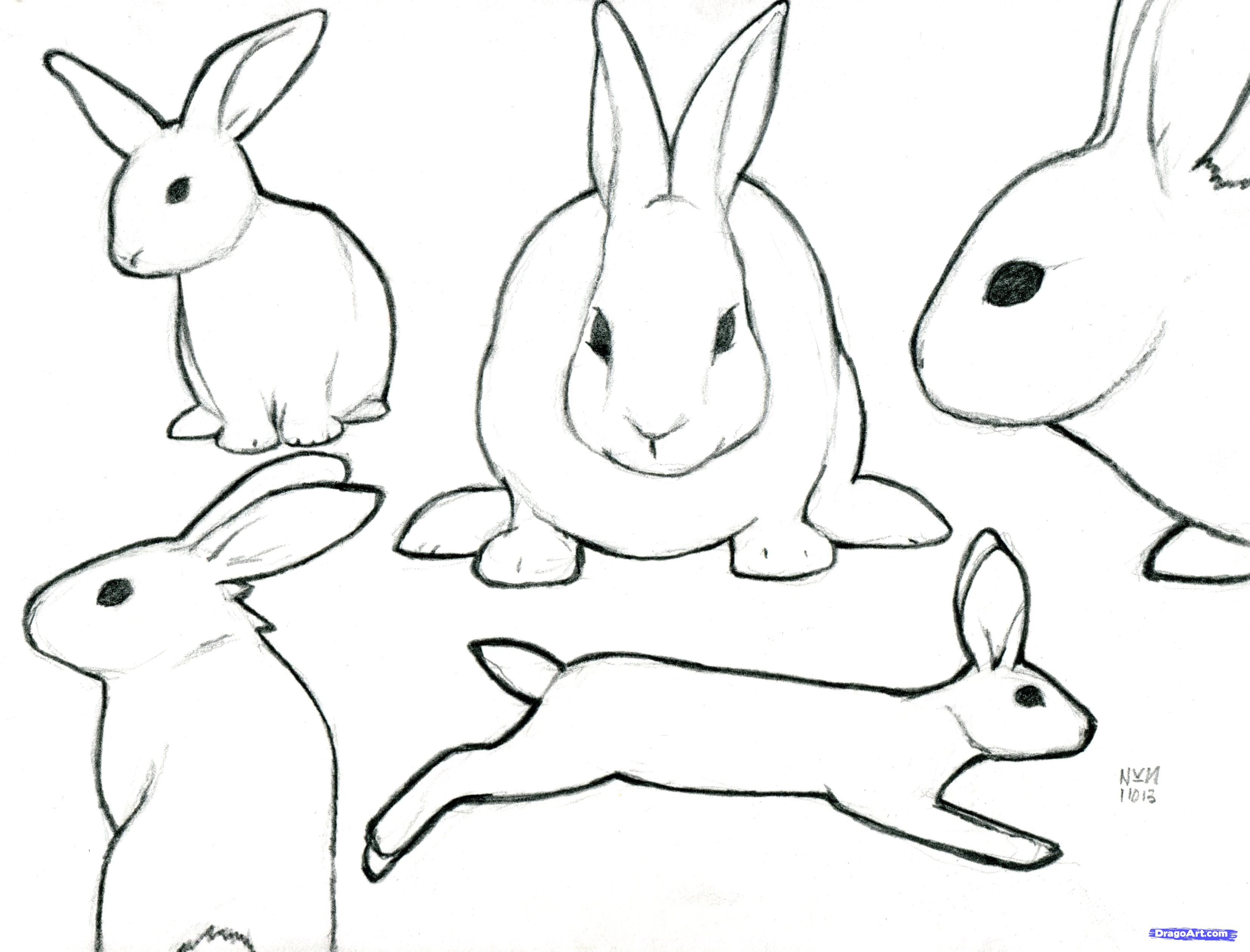 Free Rabbit Cartoon Outline Download Free Clip Art Free Clip Art On Clipart Library