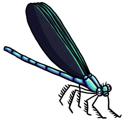free dragon fly clipart