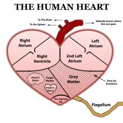 Realistic Heart Diagram 99 F150 Ignition Wiring Free Human Sketch Download Clip Art Anatomy Body Ideas
