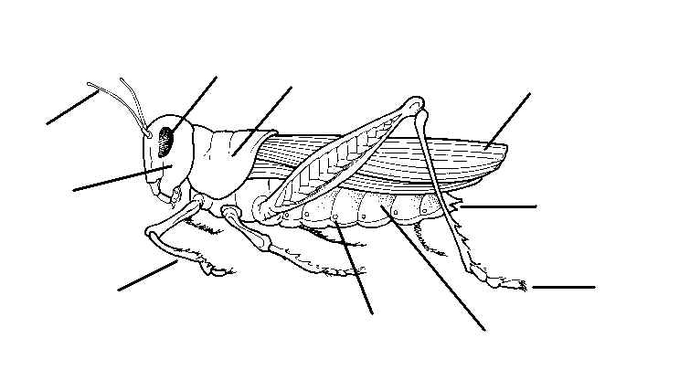 BE AN EXPERT: Insect Study