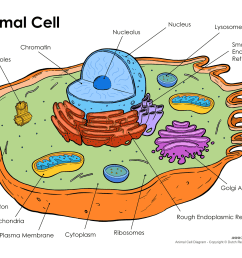 printable animal cell diagram labeled unlabeled and blank [ 1500 x 1159 Pixel ]