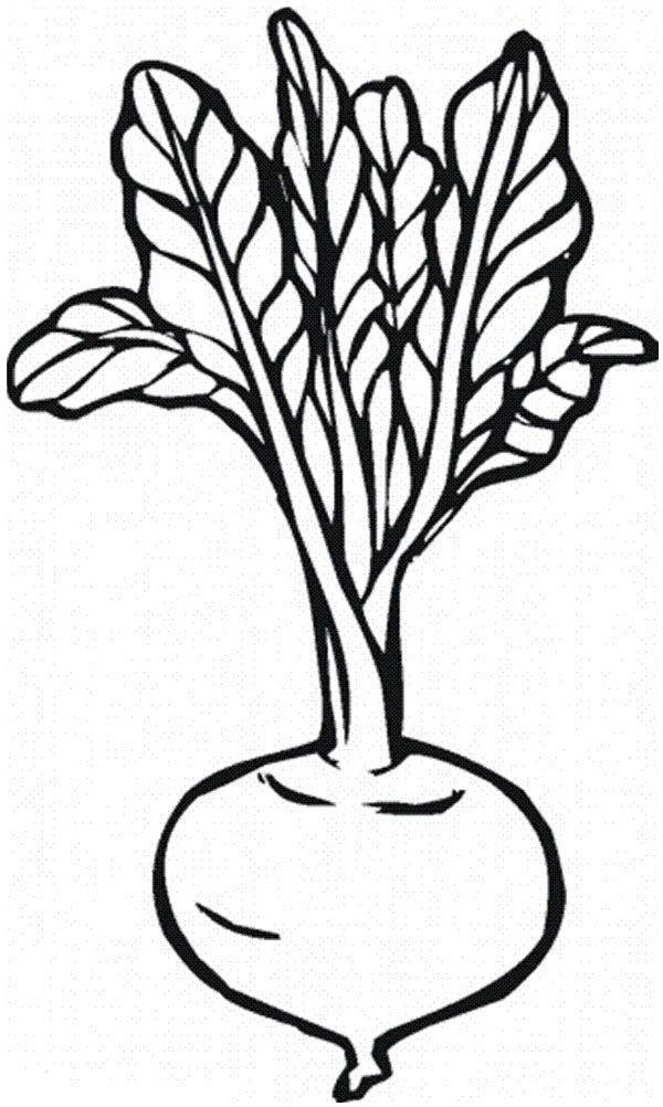 Beetroot Vegetables Coloring Page: Beetroot Vegetables