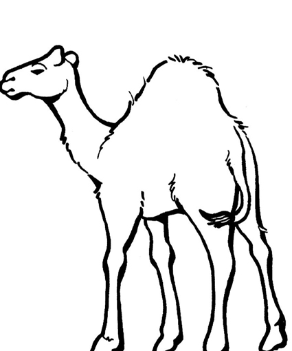 Free Camel Pictures To Print, Download Free Clip Art, Free