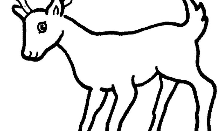 Of wild only outline clip art wallpaper hd coloring pages animal jam smartphone high quality