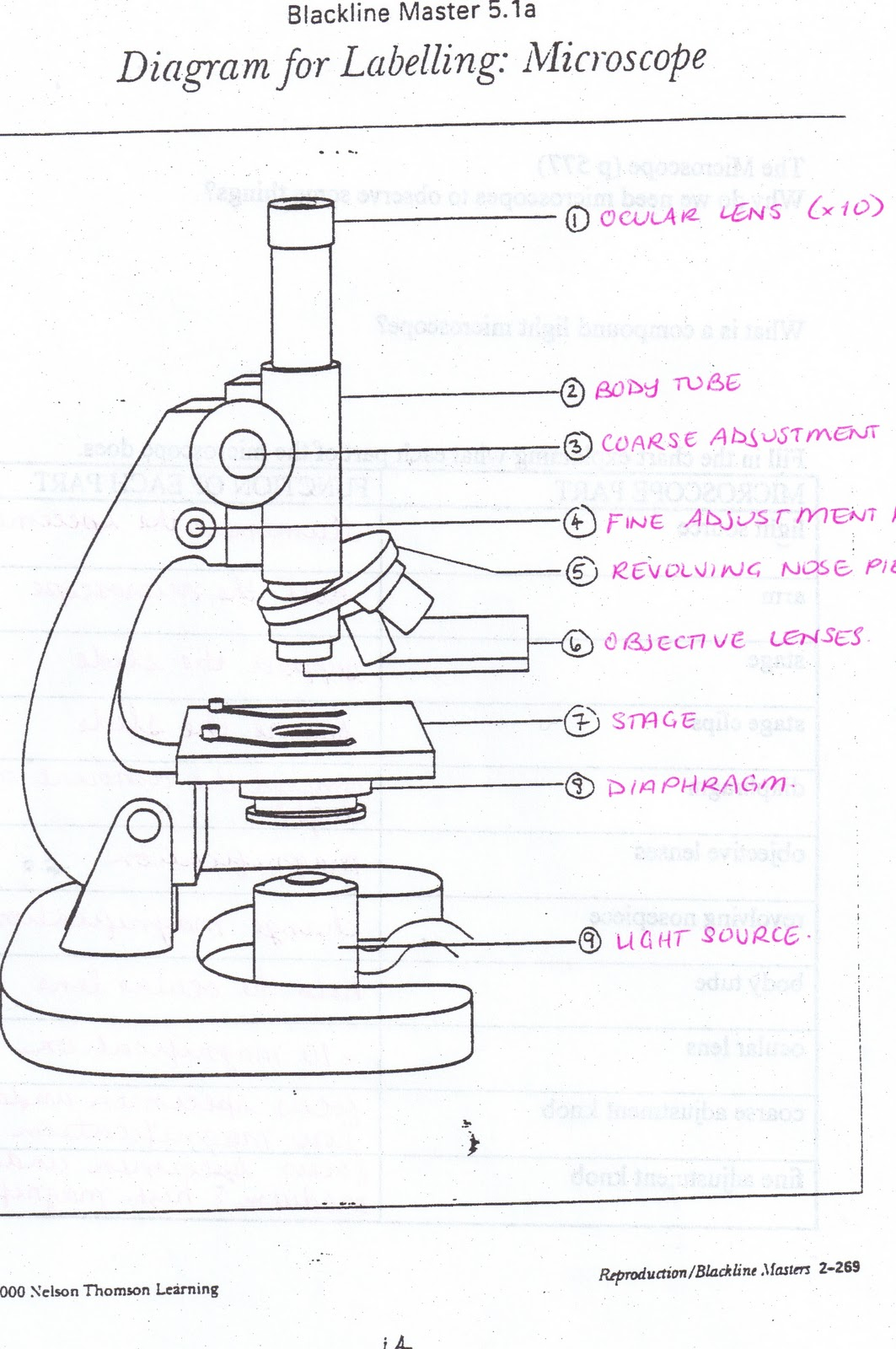 Free Microscope Drawing Download Free Clip Art Free Clip