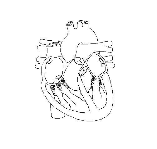Free Blank Heart Diagram, Download Free Clip Art, Free