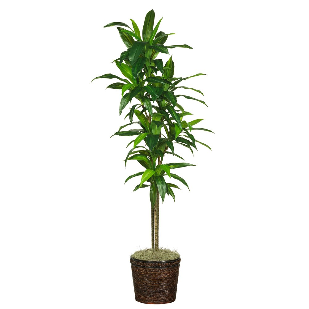 medium resolution of 70 dracena w basket silk plant real touch