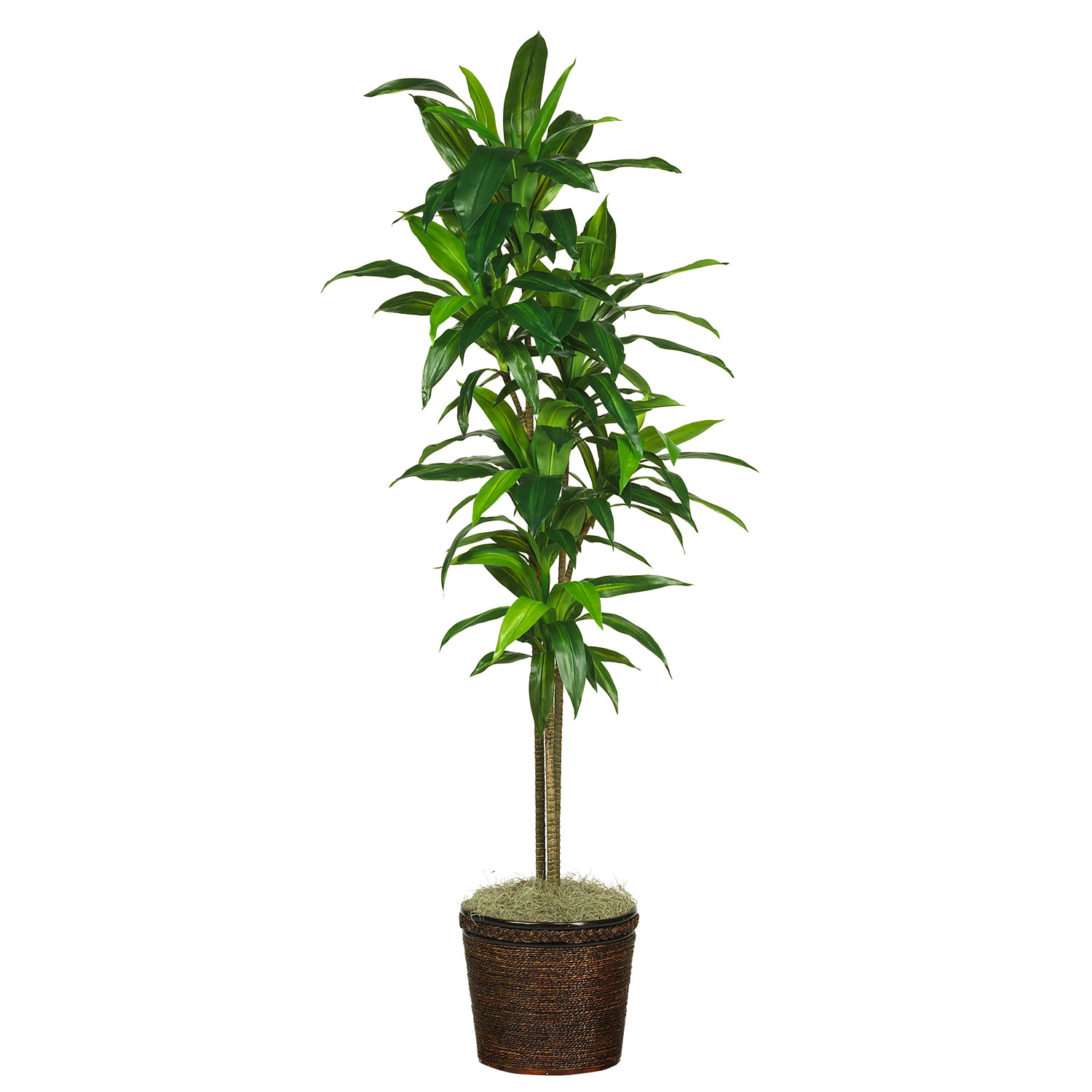 hight resolution of 70 dracena w basket silk plant real touch