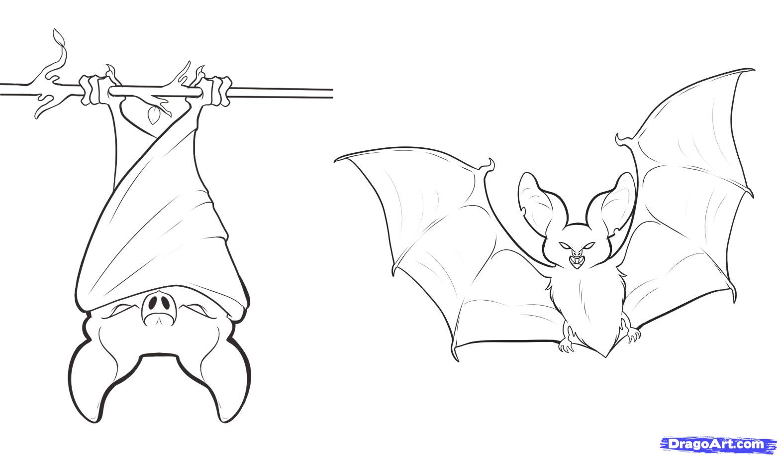 How to Draw Bats, Step by Step, forest animals, Animals
