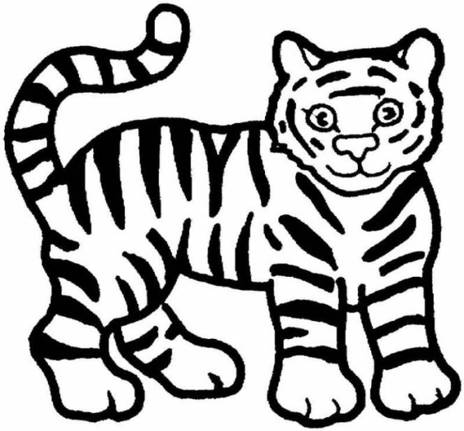Tiger Coloring Pages Free Printable Pictures For Kids