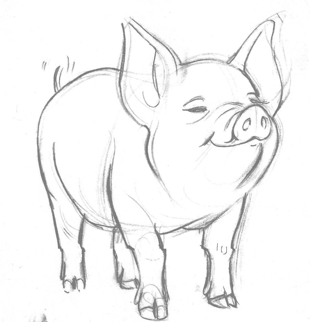 Free Mean Pig Logos Download Free Clip Art Free Clip Art