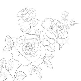 Free Rose Drawing Outline, Download Free Clip Art, Free