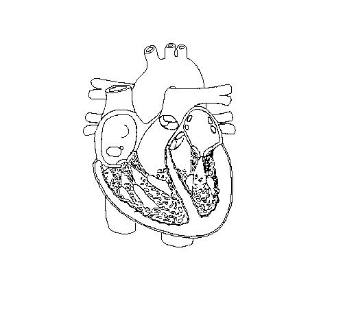 Free Unlabelled Diagram Of The Heart, Download Free Clip