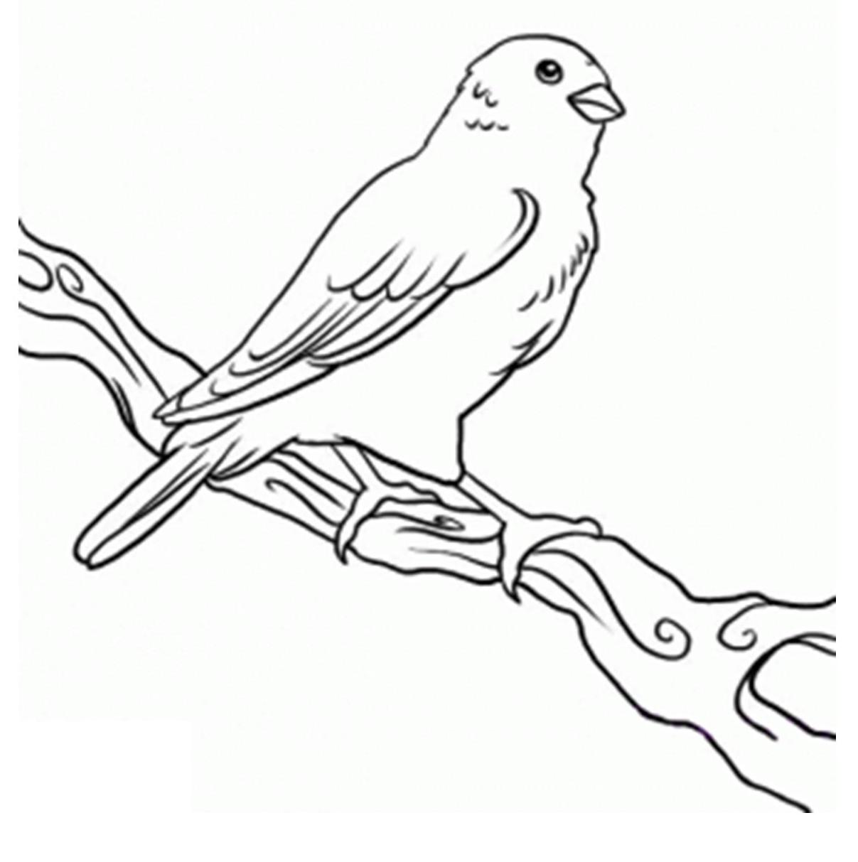 Canary Clipart Black And White