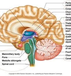 designs and diagram of brain parts picturespider com [ 1536 x 1014 Pixel ]