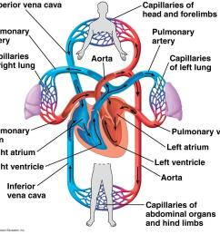 Free Circulatory System [ 1082 x 1148 Pixel ]
