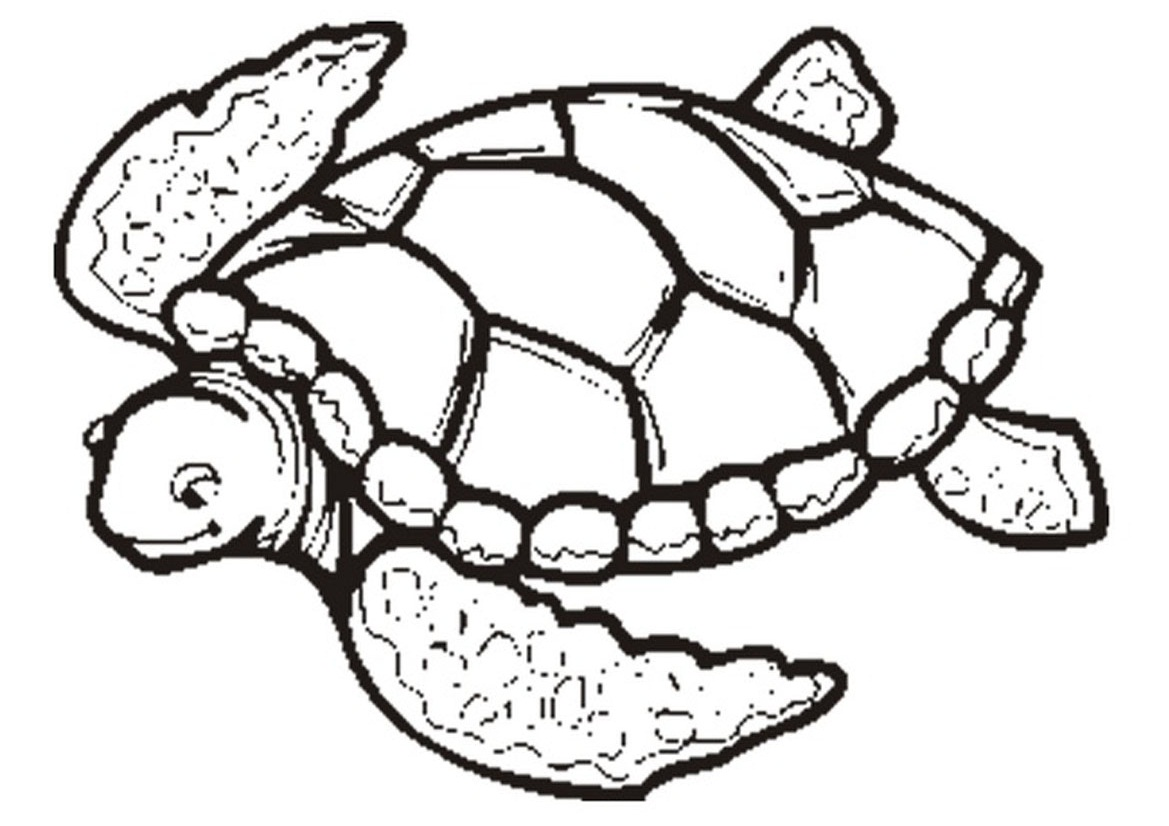 Free Turtle Outline Download Free Clip Art Free Clip Art