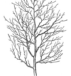 spooky tree image graphics fairy21 the graphics fairy [ 1018 x 1600 Pixel ]