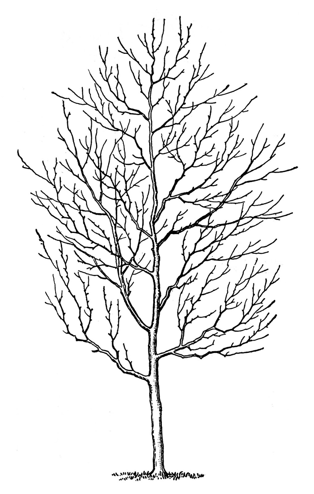 hight resolution of spooky tree image graphics fairy21 the graphics fairy
