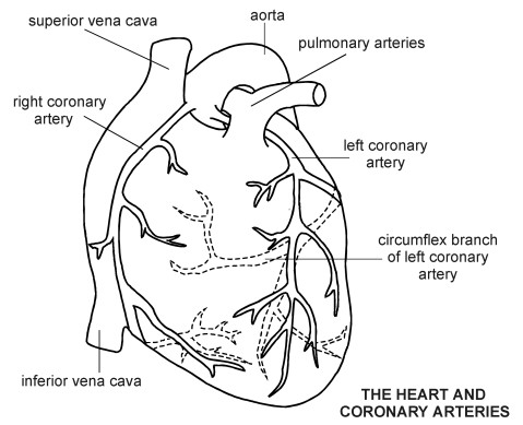 Free Blank Heart Diagram, Download Free Clip Art, Free