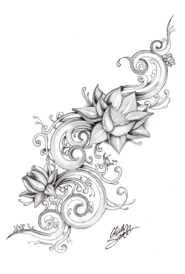 Realistic Lotus Drawing : realistic, lotus, drawing, Realistic, Lotus, Flower, Drawing, Library