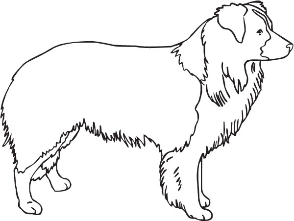 Free Border Collie Outline, Download Free Clip Art, Free
