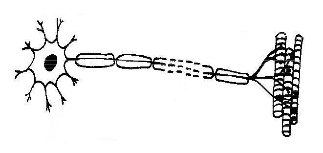 Free Unlabeled Eye Diagram, Download Free Clip Art, Free