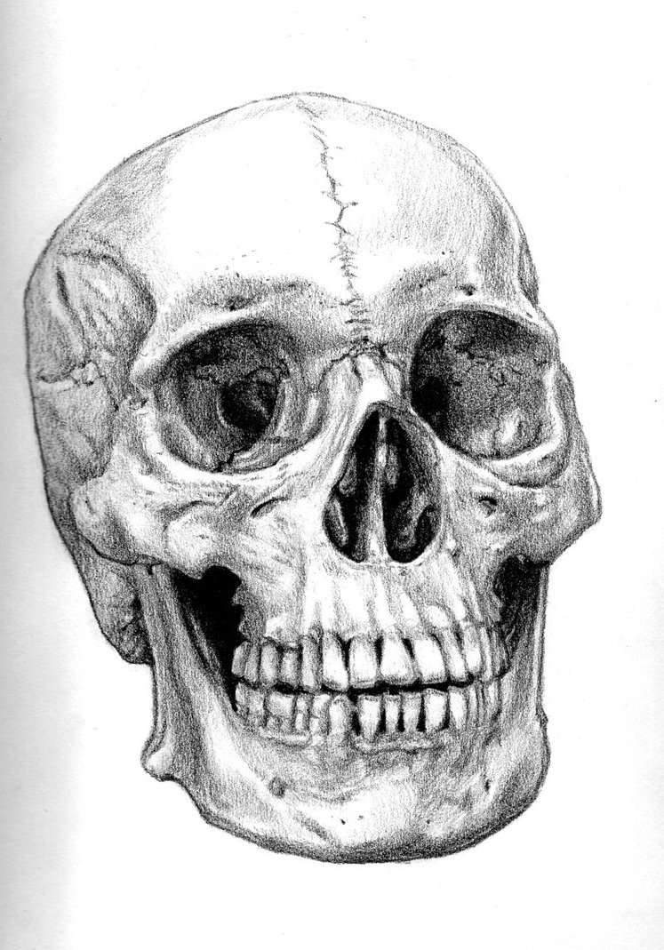 hight resolution of human skull drawing reference gallery