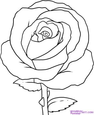 rose simple drawing step drawings clipart clip library