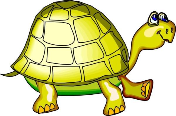 free turtle cartoon