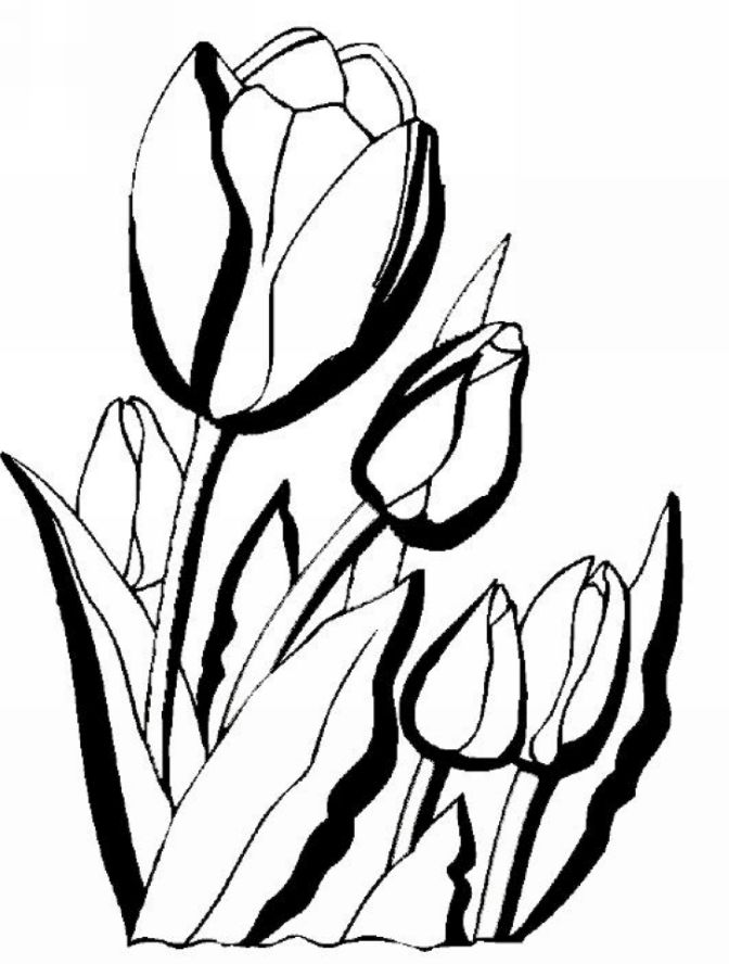 Free Corn Stalk Coloring Page, Download Free Clip Art