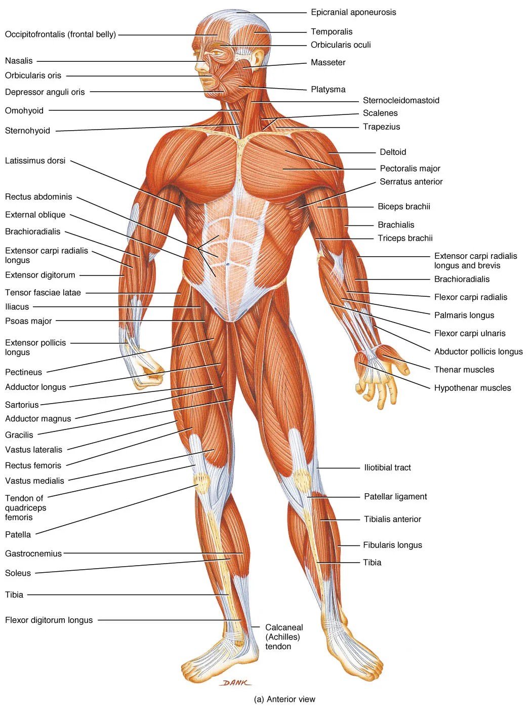 hight resolution of  human body pictures science for new page 2